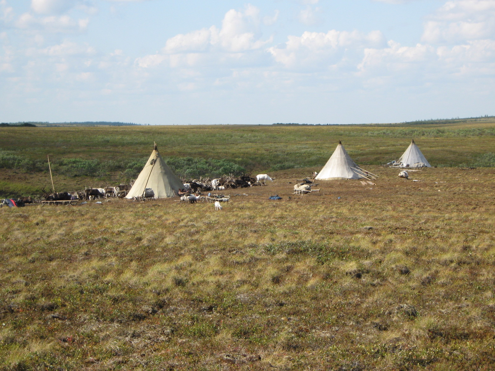 Tundra Chums